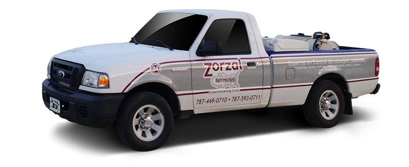 Guagua Zorzal